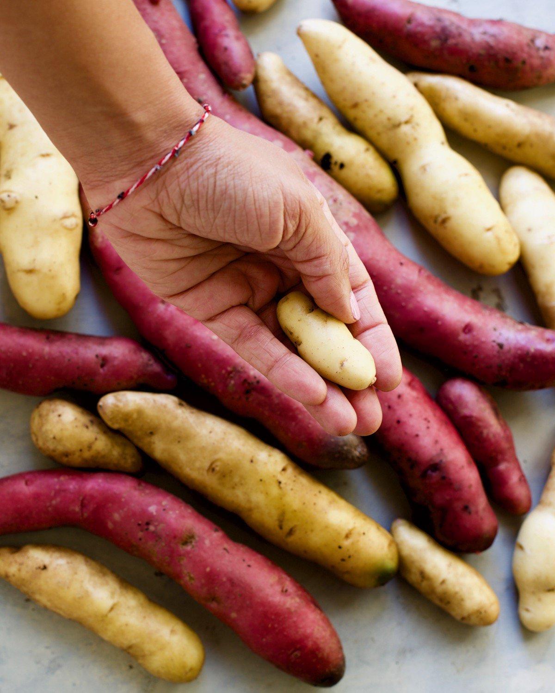 Fingerling Potato